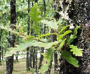 bosco di monferrara - legambiente